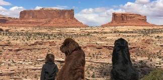 Julian Becker priatelstvo so zvieracimi kamaratmi fb