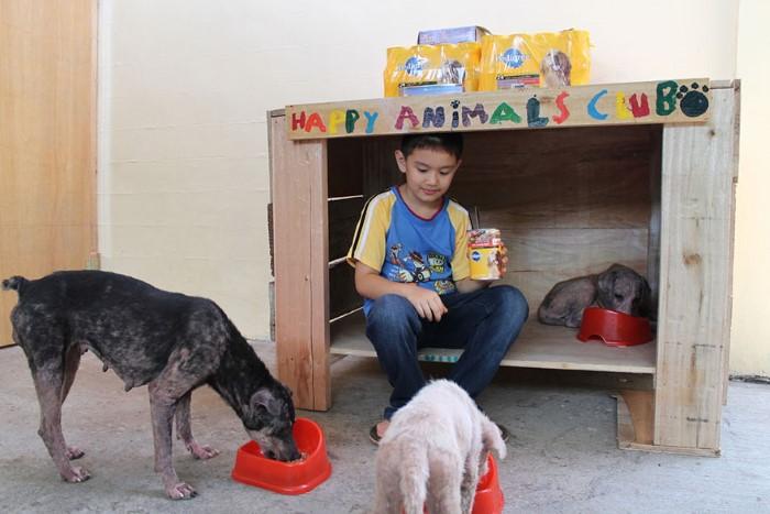 Happy Animals Club Ken zachranca psikov a maciek 1