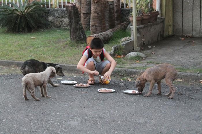 Happy Animals Club Ken zachranca psikov a maciek 8