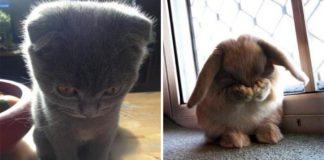 Aj zvieratká sa vedia hanbiť a vyzerajú pritom naozaj rozkošne!