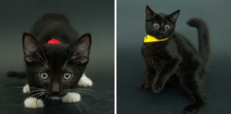 Casey fotí čierne mačky z útulku, aby zvýšila ich šance na adopciu, keďže ich nikto nechce