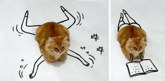 16 nekonečných príbehov jednej mačky. Pridáš aj Ty jeden?