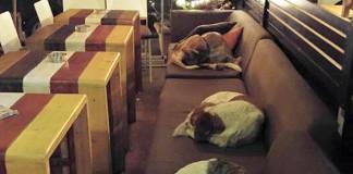 Keď odídu hostia, kaviareň necháva prespávať túlavých psíkov vo vnútri