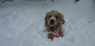 Títo psíkovia priam milujú sneh a zimu. Sleduj, ako si užívajú!