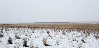 Na tejto fotografii je stádo 550 oviec. Nájdete aspoň jednu?