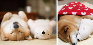 Zaspáva vždy v rovnakej polohe, ako jeho obľúbená plyšová hračka. TO je roztomilé!