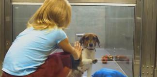 TÁTO reklama na podporu psíkov z útulkov ťa uchopí priamo za srdce!