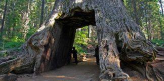 Jedinečné stromové tunely