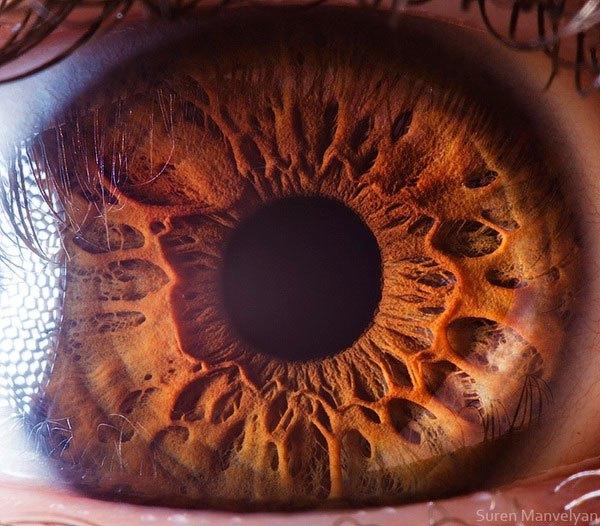 suren manvelyan close up makrofotografie oci 15
