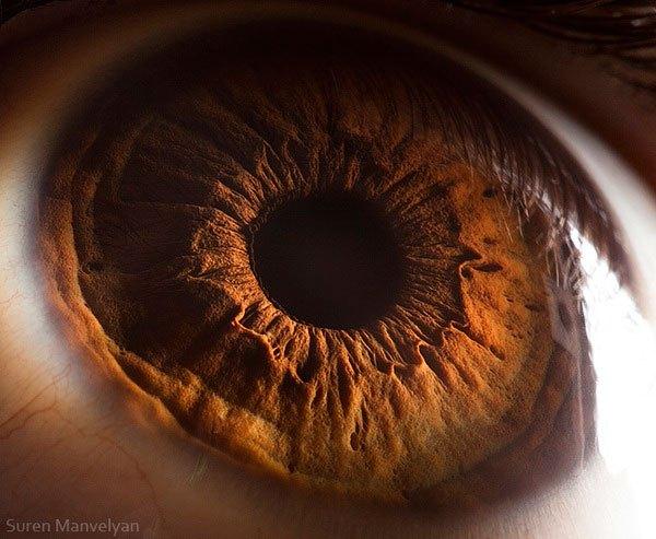 suren manvelyan close up makrofotografie oci 6