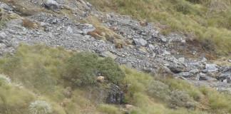 TENTO kopec na Novom Zélande je pokrytý niečim úchvatným. Pozri sa bližšie...