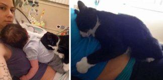 Mačka sa stala opatrovateľkou dieťatka ešte vtedy, keď bolo v brušku. Od malého človiečika sa nepohne ani na krok!