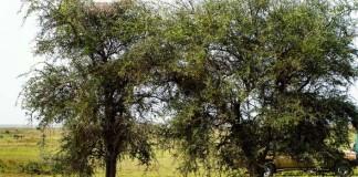 Nájdeš prefíkaného leoparda skrytého v strome?