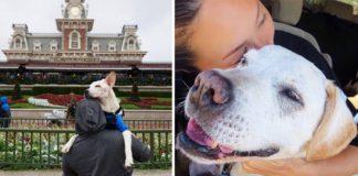 Keď psíkovi našli nádor, majitelia ho zobrali na epický výlet naprieč USA