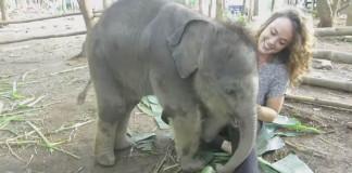 Sloníča je tak roztomilé a hravé, že ho budeš chcieť mať doma