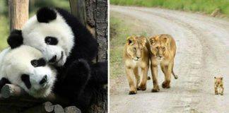 Týchto 20 roztomilých zaľúbených párov zo zvieracej ríše ti rozhodne spraví deň krajším