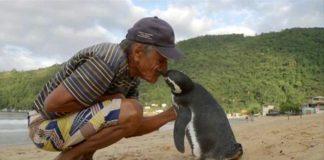 Tučniak každoročne prepláva 8000 km, aby navštívil muža, ktorý mu zachránil život